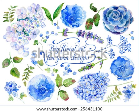 Set of different blue, cyan hydrangea, lavender, currant for design. Watercolor flowers, leaves. Set of floral elements to create compositions.  - stock photo