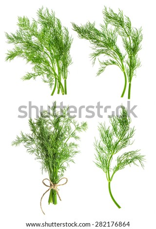 Set of dill herb leaves isolated on white background. Condiment. Food ingredient - stock photo