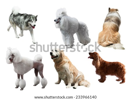 Set of dogs. Isolated on white - stock photo
