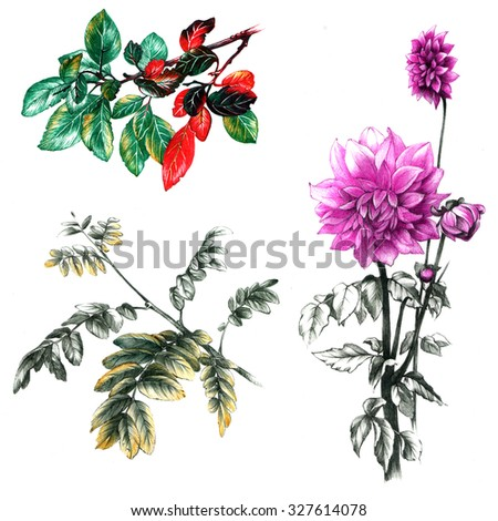 Set of drawings autumn leaves and chrysanthemum flower - stock photo