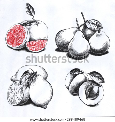 Set of drawings fruits  - stock photo