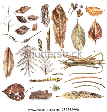 Set of dried plants collected on the North of Bali. Isolated over white background - stock photo