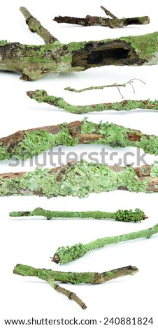 Set of dry tree branch, isolated on white background - stock photo