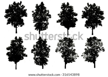 set of eight trees silhouettes isolated on white background with clipping path - stock photo