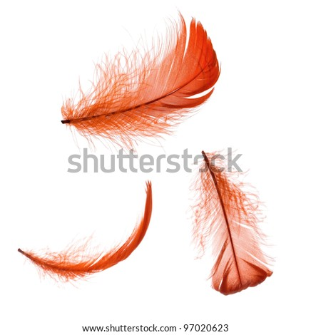 Set of elegant red feather in different positions