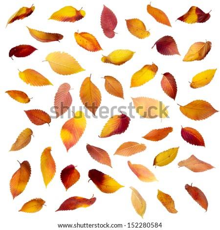 Set of falling autumn leaves isolated on white - stock photo