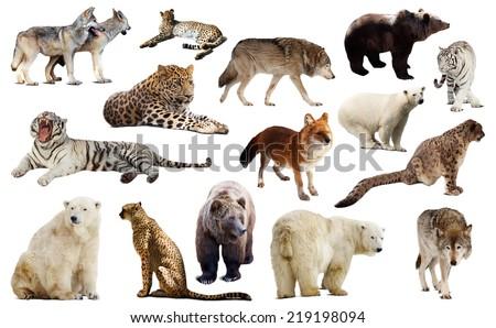 Set of few predators. Isolated over white background  - stock photo
