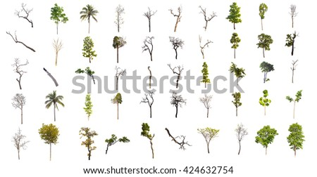 set of fifty trees, part of trees, green trees, dead trees and trees isolated on white background. - stock photo