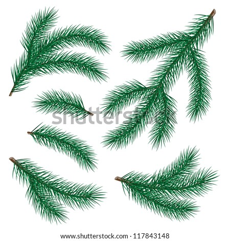set of fir branch on white background.