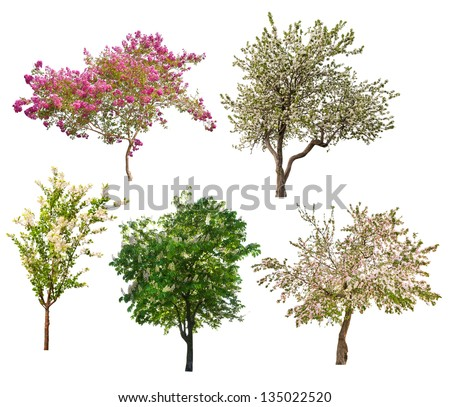 set of five blooming trees isolated on white background - stock photo