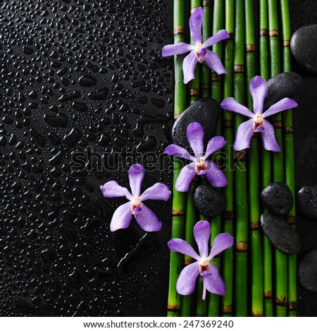 Set of five orchid with bamboo grove on wet  - stock photo