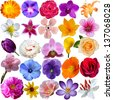 set of flower heads isolated on white background - stock vector