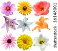 Set of flower heads isolated on white background - stock photo