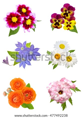 set of flowers bunch isolated
