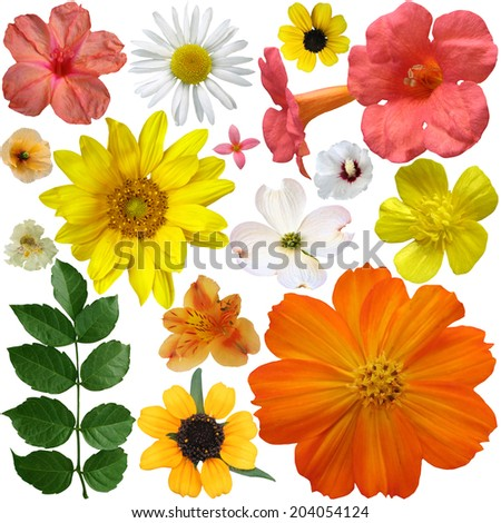 set of flowers on a white background  - stock photo