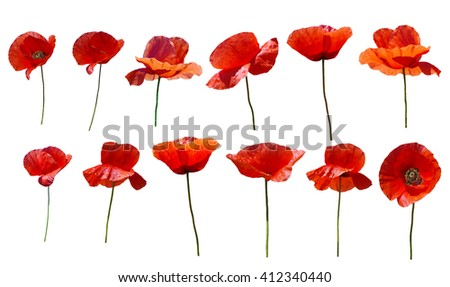 Set of flowers poppies. Isolated on white background. - stock photo