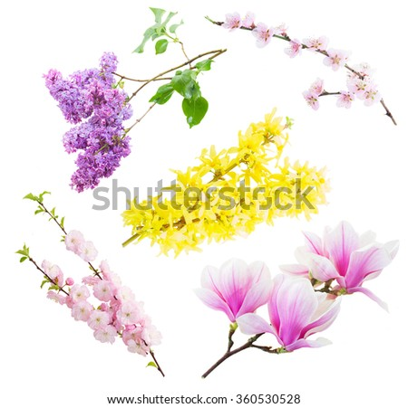 Set of flowers  tree twigs with blooming flowers isolated on white background - stock photo