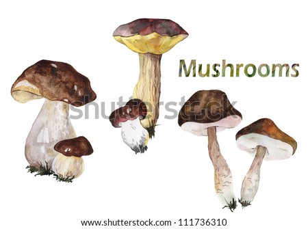Set of forest mushrooms