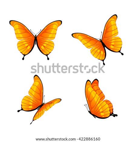 Set of four orange butterflies isolated on white background, illustration. - stock photo