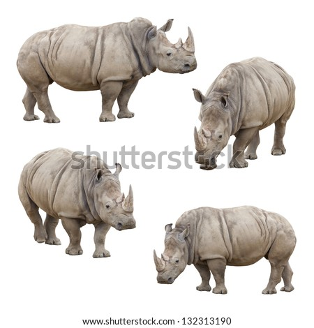 Set of Four Rhinoceros Isolated on a White Background. - stock photo