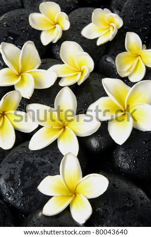 Set of frangipani flower on zen stones - stock photo