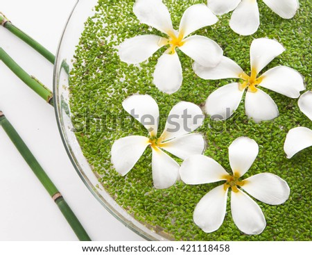 Set of frangipani with leaf in bowl of and bamboo grove - stock photo