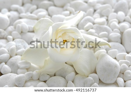 Set of gardenia on pile of white stones