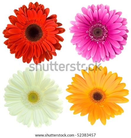 set of gerbera flowers