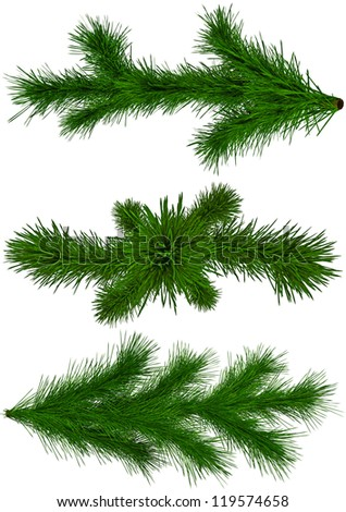 set of green Christmas fir-tree branches on white background