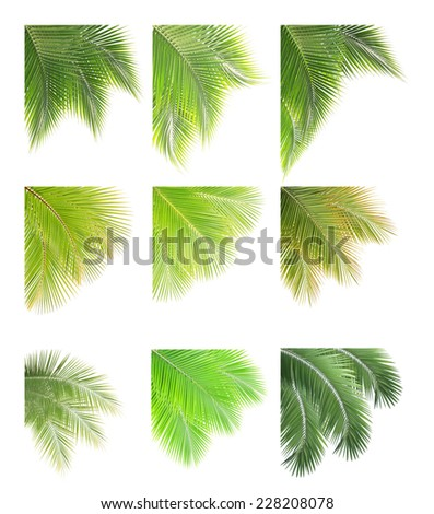 Set of Green palm or coconut leaves frame isolated on white background - stock photo