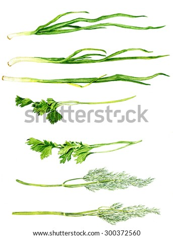 set of green stuff drawing by watercolor at white background, chives, parsley and dill, hand drawn  artistic painting illustration