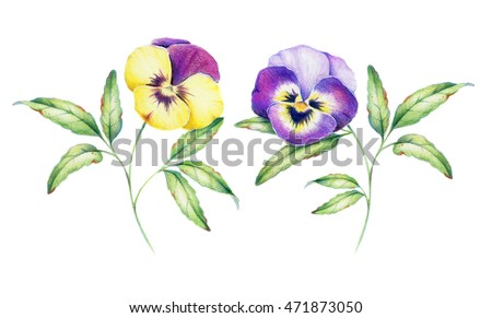 Set of hand drawn illustration of pansy flowers. Purple, violet, yellow with green leaves. Retro painting with romantic summer flowers. For wedding cards, birthday cards, romantic background etc.