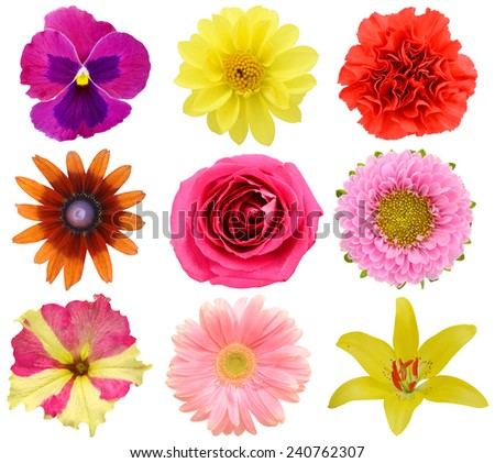 Set of head flowers on a white background.