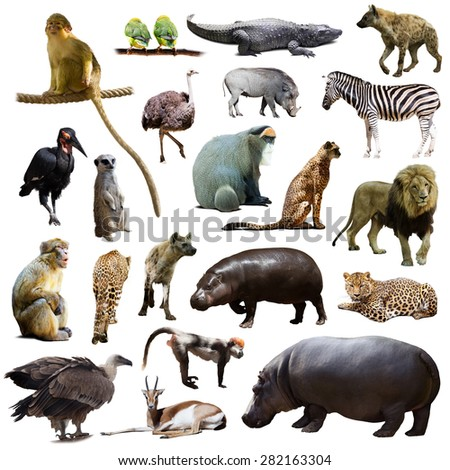 Set of hippo and other African animals. Isolated on white  - stock photo