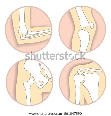 Set Human Joints Elbow Knee Hip Stock Illustration 561047590 ...