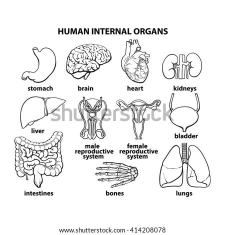 Vant human sex organ fucking hot