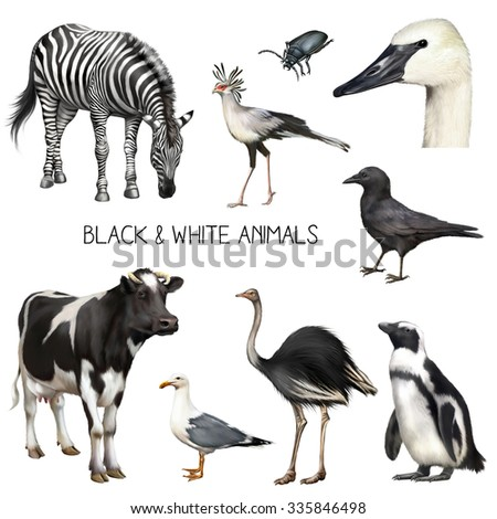 Set of illustrations of Zebra eating grass, secretary bird, standing black crow, swan head, black bug, pinguin and a seagull. Isolated on white background - stock photo