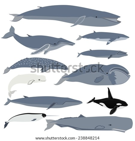 Set of images of whales. The illustration on white background. - stock photo