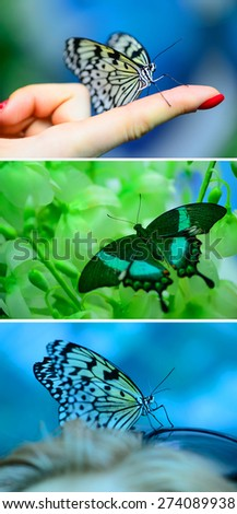 set of insect butterfly on a colored background macro - stock photo