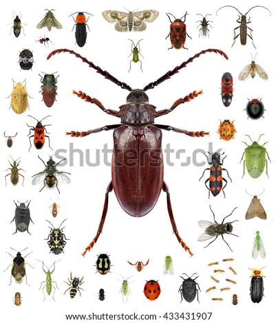 Set of insects isolated on a white background. Long horn beetle  and various other insects. Small versus big size (parameter) of insects concept