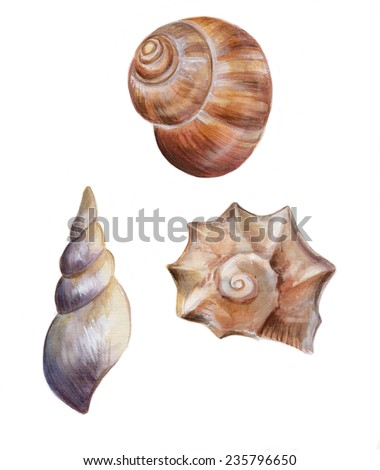 Set of isolated hand drawn seashells. Watercolor illustration. - stock photo