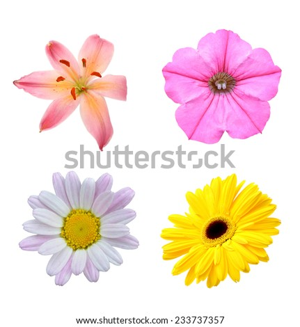 set of isolated summer flowers