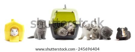 set of kittens - stock photo