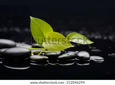 Set of leaf with therapy stones  - stock photo