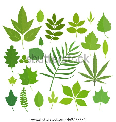 Set of leaves icons isolated on white background.