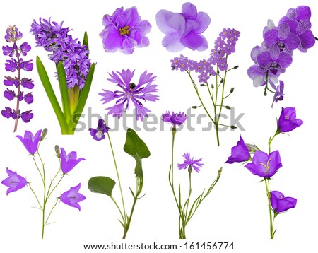set of light lilac flowers isolated on white background