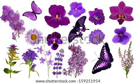 set of lilac color butterflies and flowers isolated on white background - stock photo