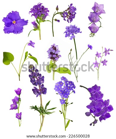 set of lilac flowers isolated on white background - stock photo