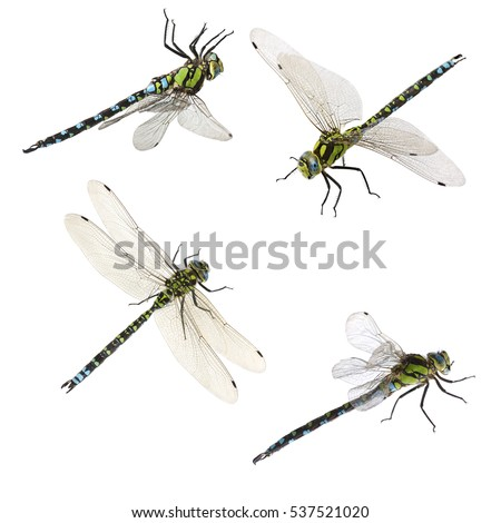 set of macro shots of dragonfly. isolated on white background
