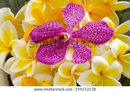 Set of many frangipani and pink orchid on green leaf - stock photo